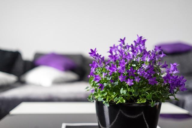 fialové kvítky